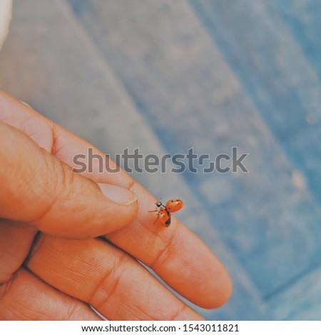 Marienkäfer auf der Hand fliegt  #1543011821