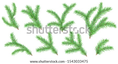 Set of Christmas tree branches with shadows isolated on white backgrounds #1543033475