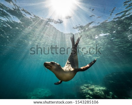 A beautiful shot of a California sea lion seal enjoying the rays of the sun in Baja California #1543285106