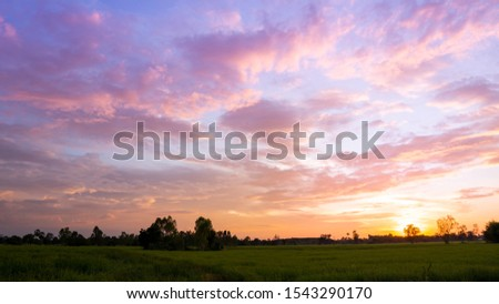 View of Rice farm in sunset time, beautiful lighting in sunset time. #1543290170