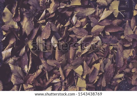 Fall leaves on the ground background #1543438769