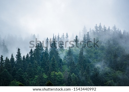 Misty foggy mountain landscape with fir forest and copyspace in vintage retro hipster style #1543440992