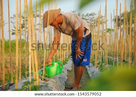 Yogyakarta, Indonesia - 25 October 2019: Portrait of a traditional farmer watering his garden in the fields #1543579052