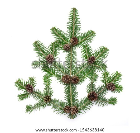 Evergreen fir branch with fir cone as decoration isolated on white background #1543638140