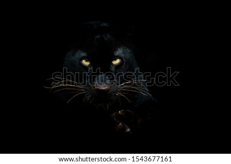 Black panther with a black background Royalty-Free Stock Photo #1543677161