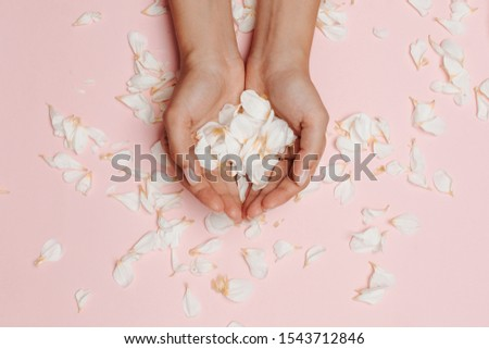 Woman's hands holding white petals, many petals on the pink background. #1543712846
