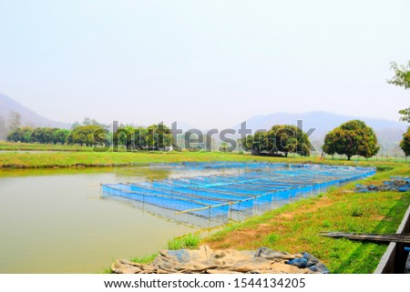 this pic shows many cage floating in earth pond in aquaculture farm
