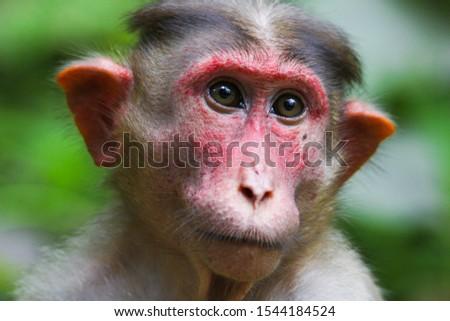 Cute monkey portrait. Monkey mother love #1544184524