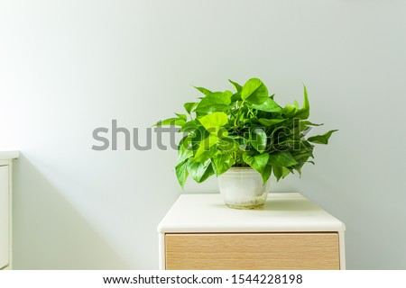 Green plants on the indoor coffee table #1544228198