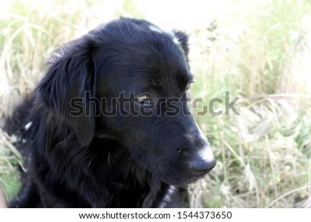 A Black Dog Close up #1544373650