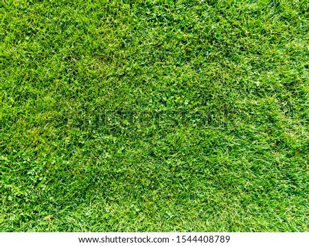 It is a photograph of a lush lawn.      #1544408789