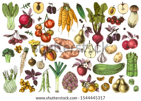 Hand drawn colorful fruits and vegetables set. 51 unique element. Vector illustration in retro style. #1544445317
