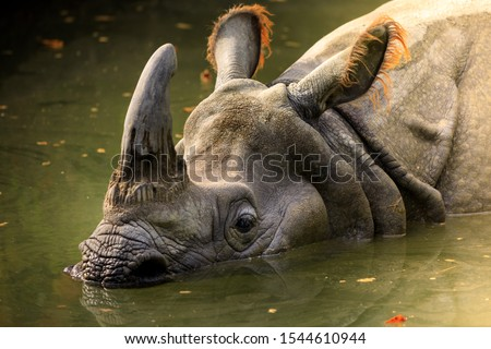 Dirty rhino in the muddy water in a zoo #1544610944