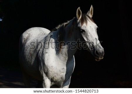 white horse on black background #1544820713