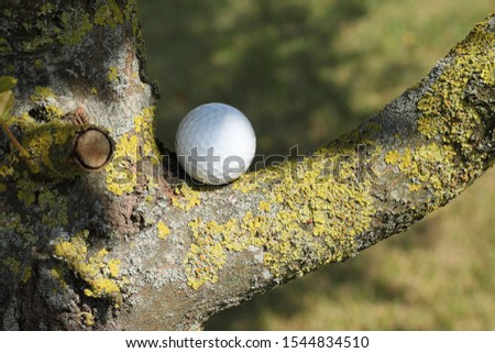 Close up of a white golf ball on a branch fork. Moss on the branch, sunny day. No persons, no other objects. Space for text or copy. #1544834510