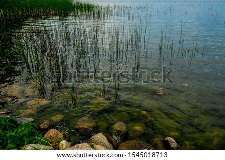This is a closeup of the tall grasses and rocky shoreline that are found on the shoreline of the Mississippi Headwaters area in Itasca State Park in Minnesota. #1545018713