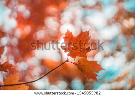 Autumn fall leaves sky Canada #1545055982