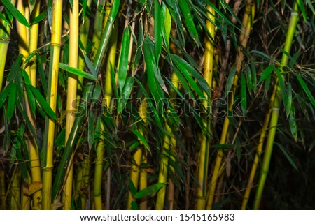 Bamboo rainforest. Bamboo plant. Bamboo trees in wood . Nature background  #1545165983