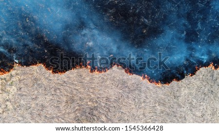 Forest and field fire. Dry grass burns, natural disaster. Aerial view. After the fire, the ground is covered with a black layer of burning and ash. View vertically down. Clear line of fire separation. #1545366428