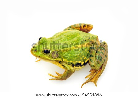 Frog isolated on a white background, and close-up pictures  #154551896