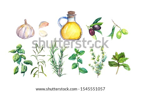 Set of herbs and spices for French cuisine - olive oil, garlic, rosemary, basil, oregano, parsley, mint, marjoram, thyme. Green aromatic plants.  Watercolor collection