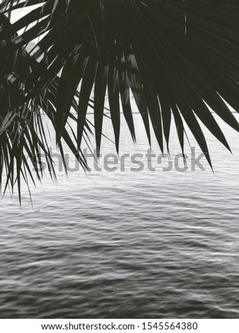 Vintage Black and White Marmaris Palm and Pine Trees
