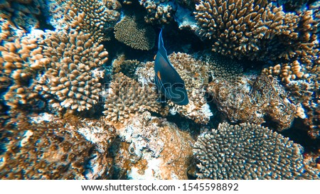 Coral Reef and Tropical Fish in Sunlight. Singapore aquarium. Feeding fish. Beautiful Red Sea Egypt. Undersea world. Beautiful corals. A lot of fish. Blue water. #1545598892
