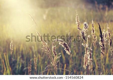 field of grass during sunset #154560824