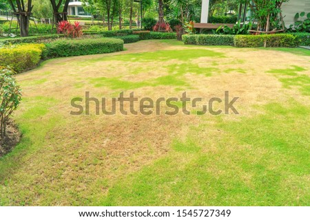 Pests and disease cause amount of damage to green lawns, lawn in bad condition and need maintaining, Landscaped Formal Garden, Front yard with garden design, Peaceful Garden, Path in the garden. #1545727349
