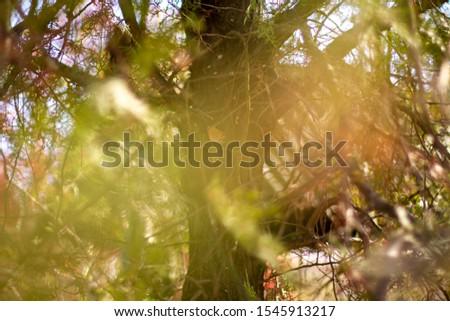 Autumn Motives. Autumn Nature. Autumn Wallpaper #1545913217
