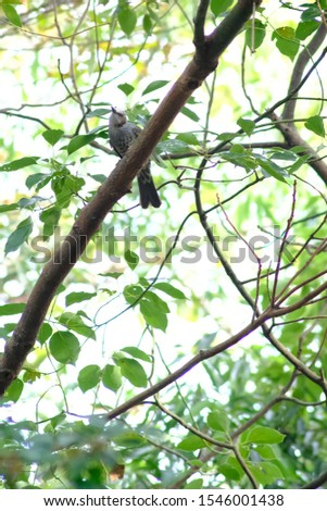 wild bird bulbul in forest #1546001438