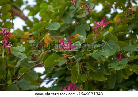 flower garden nature summer pink #1546021343