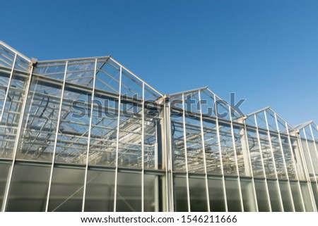 Glass transparent walls of the greenhouse with pipes and communications for growing plants, vegetables and fruits #1546211666
