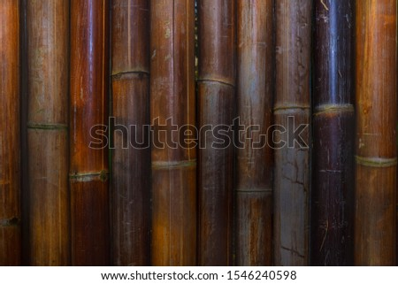 Bamboo rainforest. Bamboo plant. Bamboo trees in wood . Nature background  #1546240598