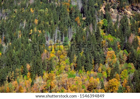View of the dense autumn forest in the mountains. Alps, France. #1546394849