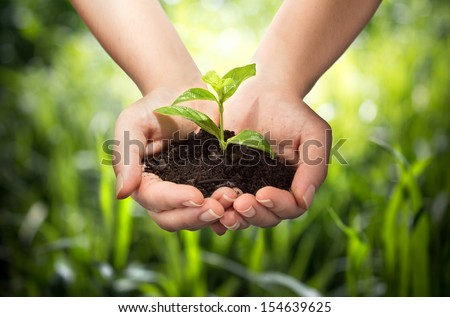 plant in hands - grass background  Royalty-Free Stock Photo #154639625