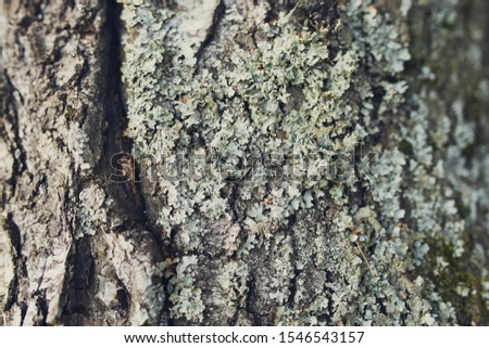the lichen Parmelia on the tree close-up #1546543157