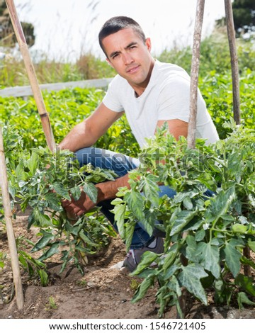 Male supervising growth of tomatoes plants in garden #1546721405