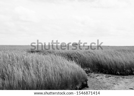 grassland in a windy day in North Germany  #1546871414