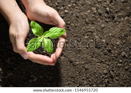 Hands holding and caring a green young plant #1546955720