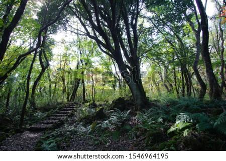 a path through a primeval forest #1546964195