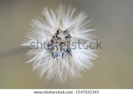 The autumn dandelion macro flower #1547031341