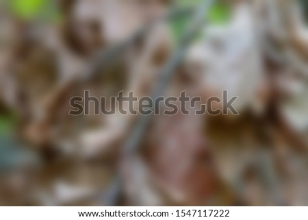 An old brown birch mushroom in a grass abstract blurred picture