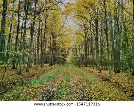 Autumn forest background. Fall day. Beautiful picture with yellow, red and orange leaves. Landscape photography. Autumn natural background. Fall forest. Growth concept. Beautiful colorful foliage