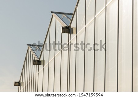 Glass transparent walls of the greenhouse with pipes and communications for growing plants, vegetables and fruits #1547159594