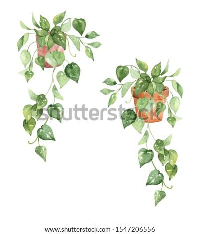 Ivy indoor plants watercolour clip art #1547206556