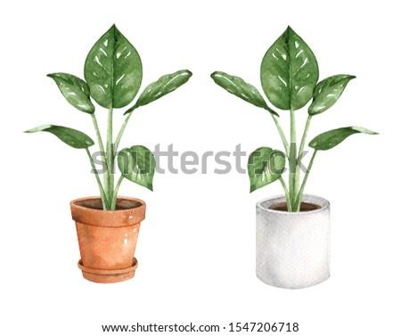 Indoor plants watercolour clip art #1547206718