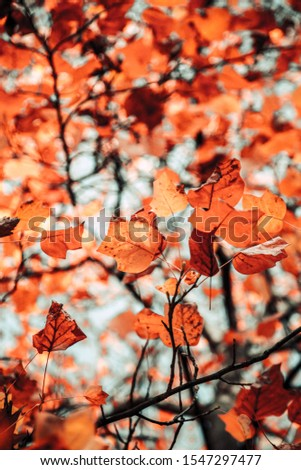 A low angle vertical shot of orange leaves on the branch with a blurred background #1547297477