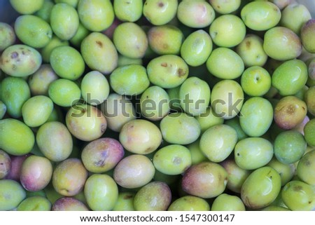 Manzanilla Cacereña variety olives. Olives or olives from Extremadura olive trees #1547300147
