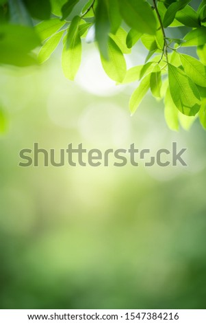 Closeup nature view of green leaf on blurred greenery background in garden with copy space using as background natural green plants landscape, ecology, fresh wallpaper concept. #1547384216